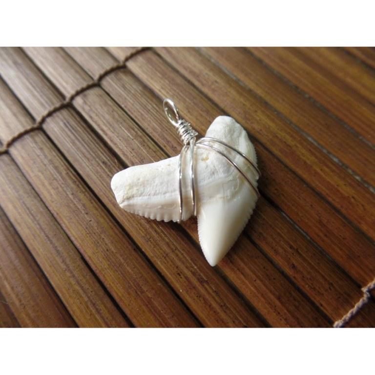 Pendentif dent de requin tigre 5.4