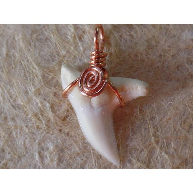 Pendentif petite dent de requin blanc 10