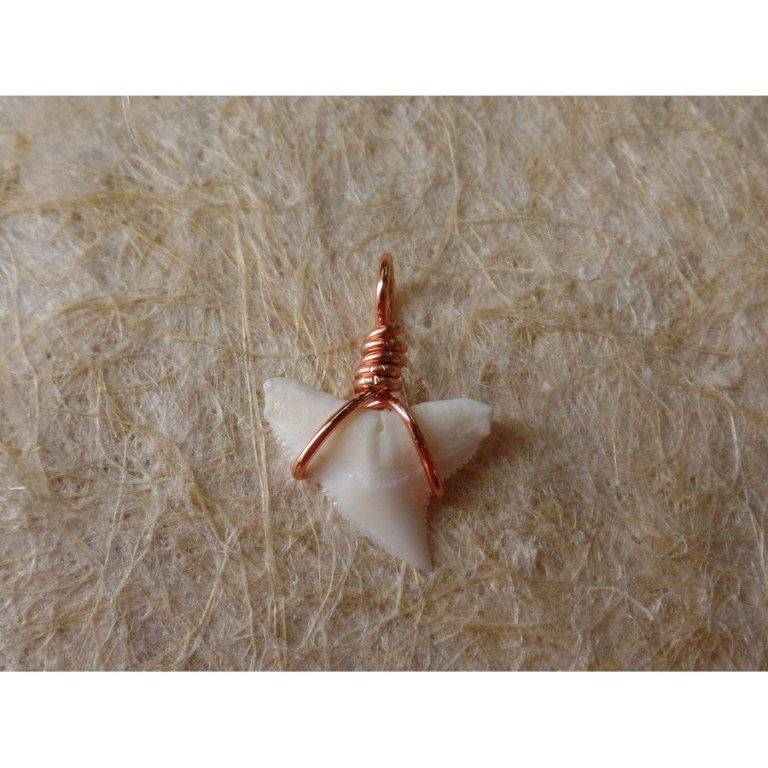 Pendentif B11 petite dent de requin blanc