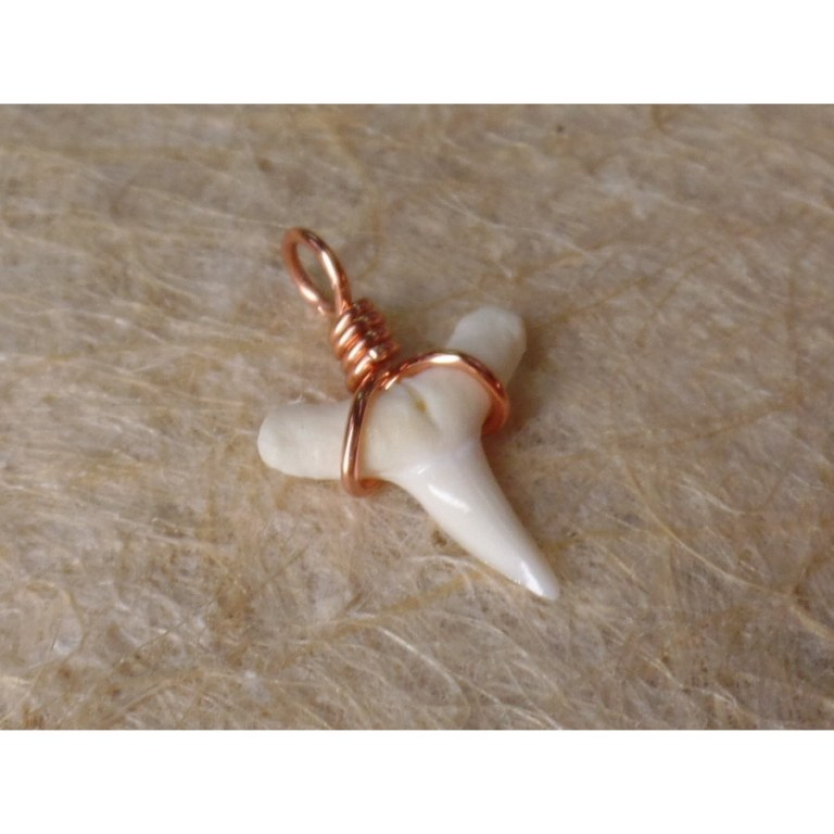 Pendentif B17 petite dent de requin blanc