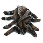 Ani thaï araignée