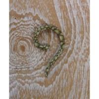 Dilatateur 6 serpent vert