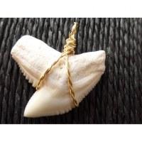 Pendentif dent de requin tigre 3.1