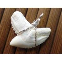 Pendentif dent de requin tigre 5.3