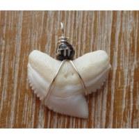 Pendentif petite dent de requin T4